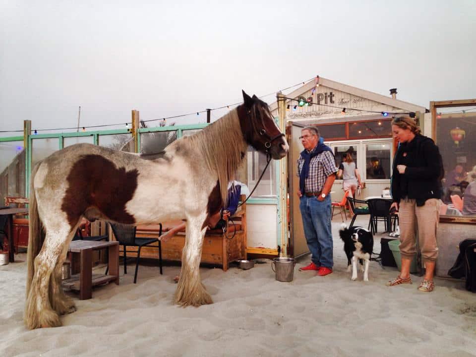 Paard parkeren kan ook